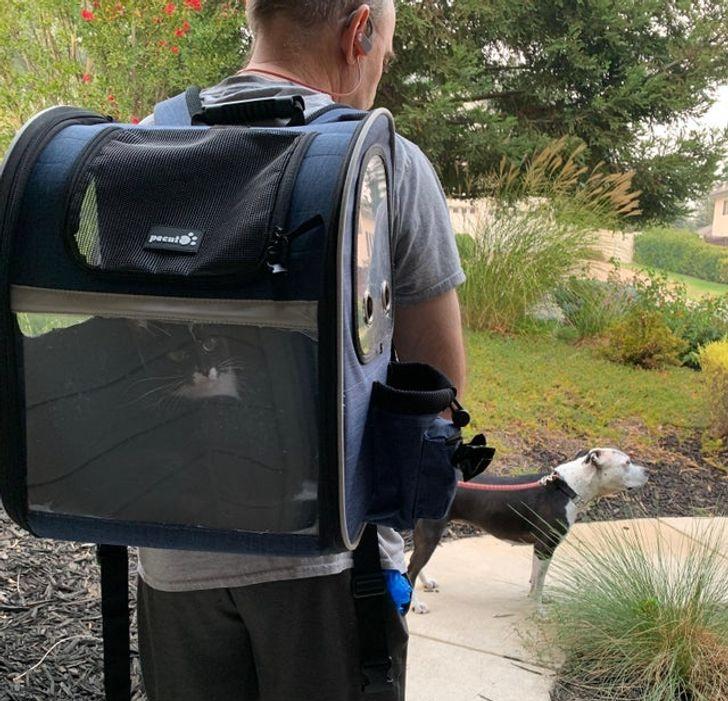 мужчина с кошкой в рюкзаке