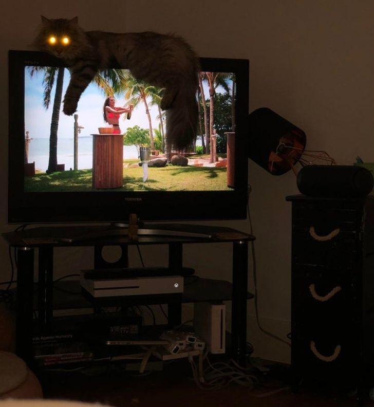 кот лежит на телевизоре