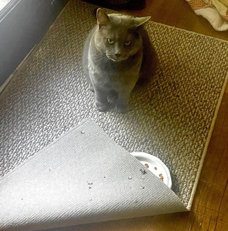 серый кот сидит на дорожке