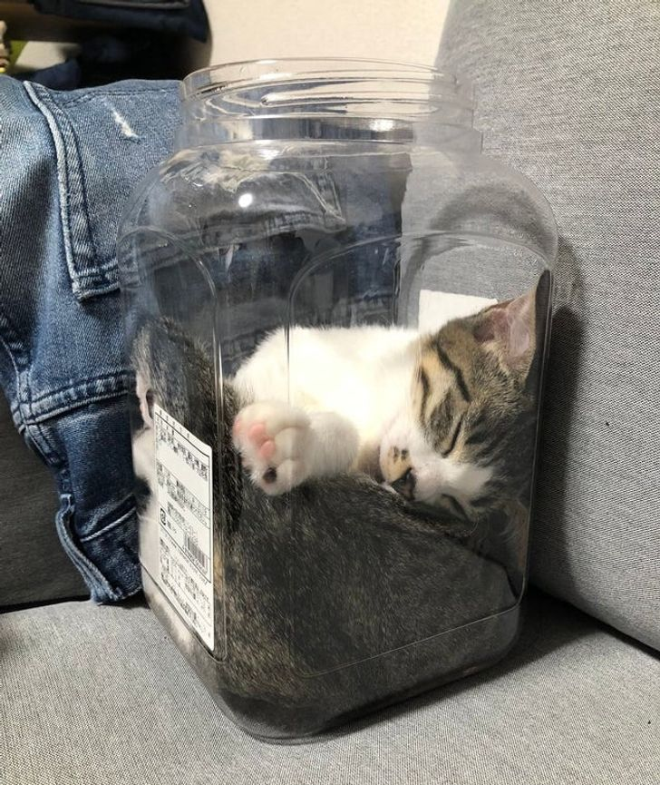 кошка спит в банке