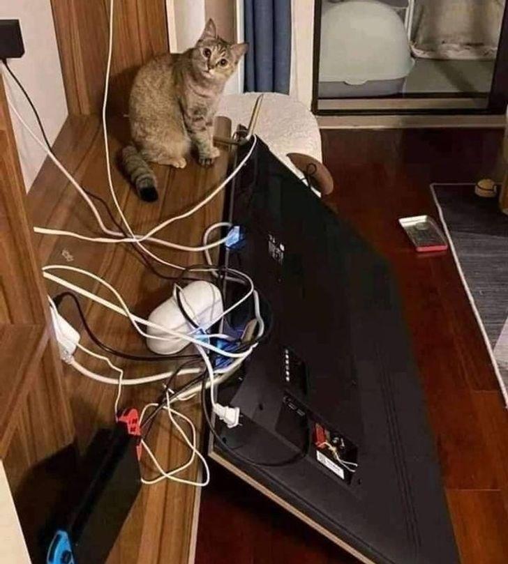 кот перевернул телевизор