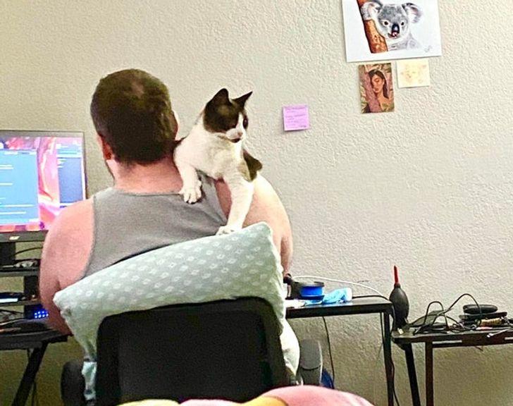 кошка сидит на плече у мужчины