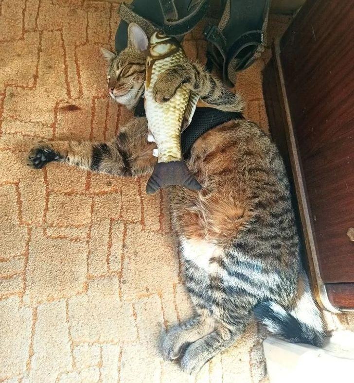 кот спит в обнимку с рыбой