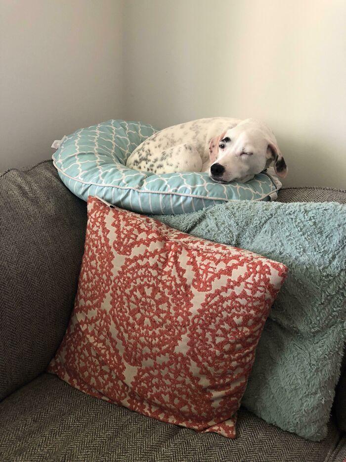 собака спит на спинке дивана