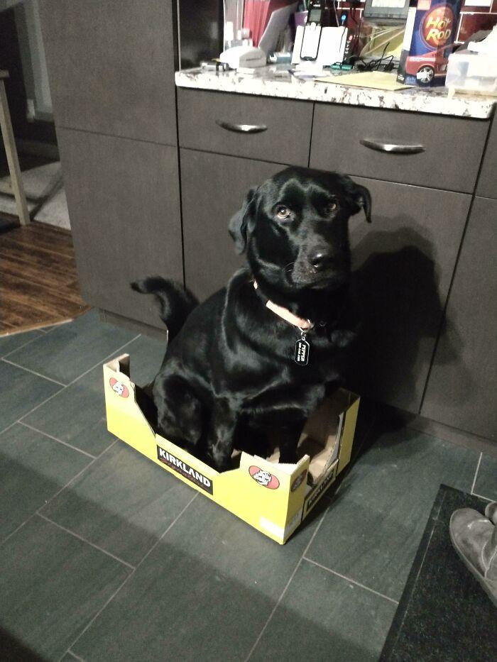 черный пес сидит в коробке