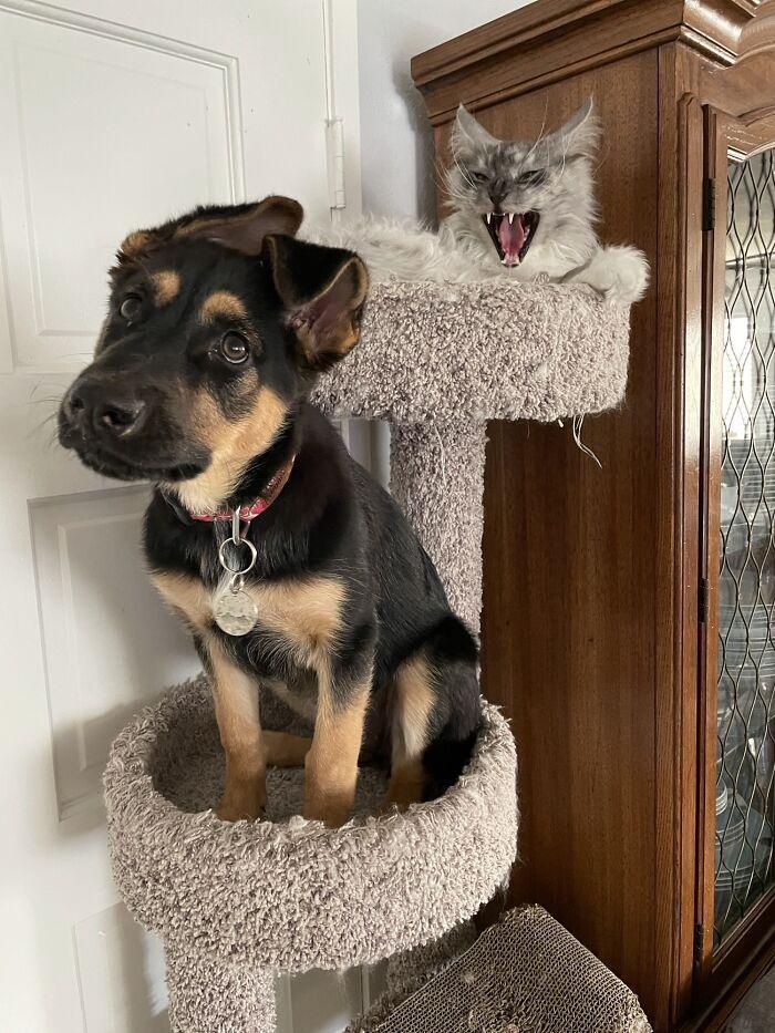 собака и кошка на кошачьем дереве