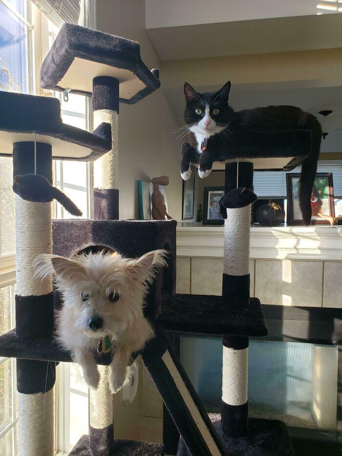 кот и собака сидят на кошачьем дереве