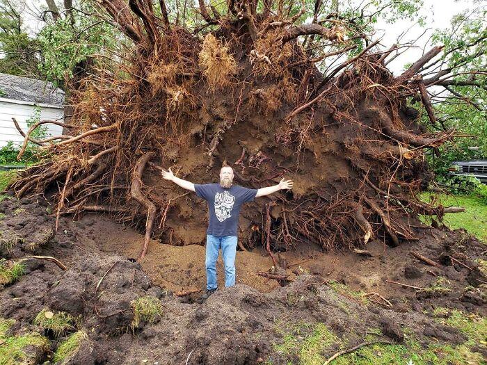мужчина стоит рядом с упавшим деревом
