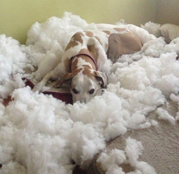 собака лежит среди ваты из подушки