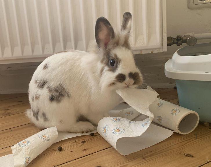 кролик ест бумажное полотенце