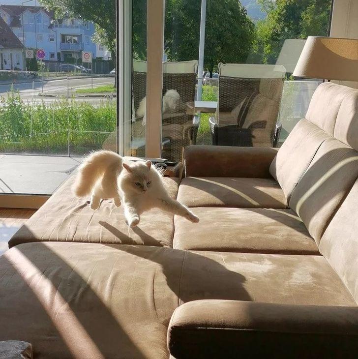 кот скачет по дивану