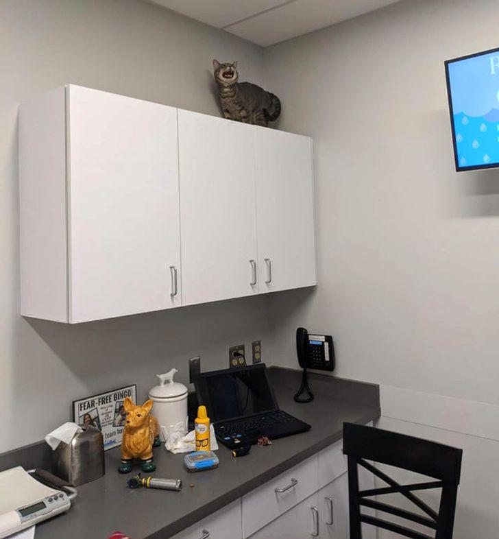 кот сидит на шкафчике и орет