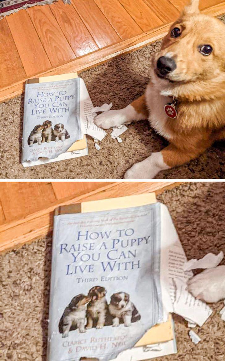 рыжая собака и порванная книга