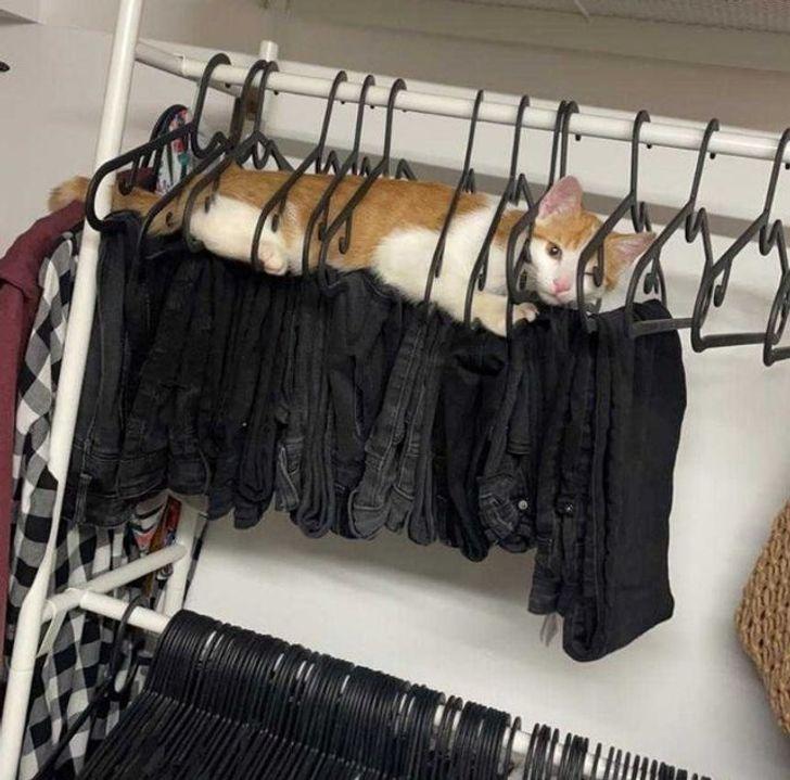 рыже-белый кот лежит на джинсах