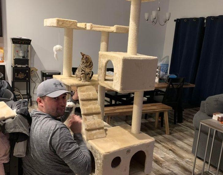 мужчина и кошачье дерево
