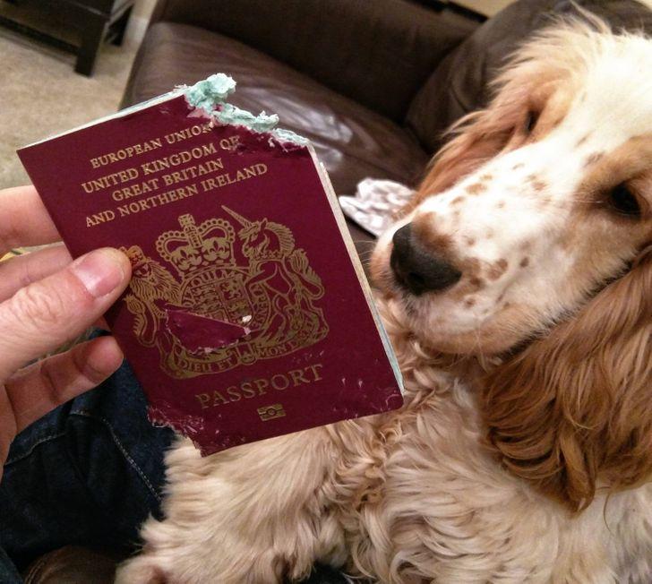 пес и пожеванный паспорт