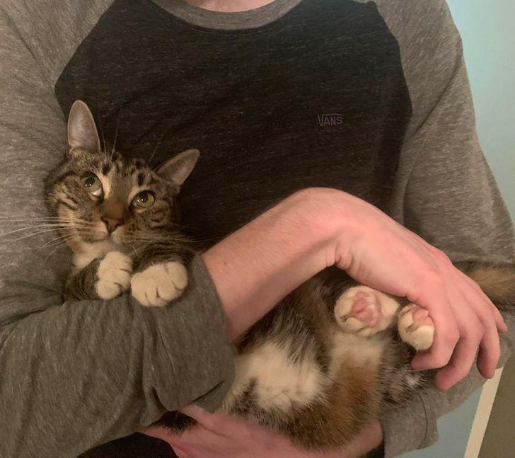 парень держит кошку на руках