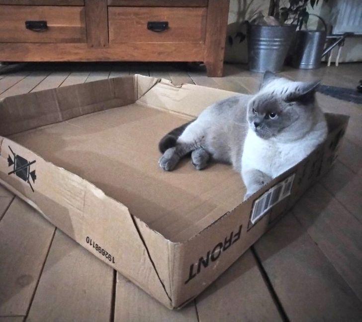 кошка лежит в коробке