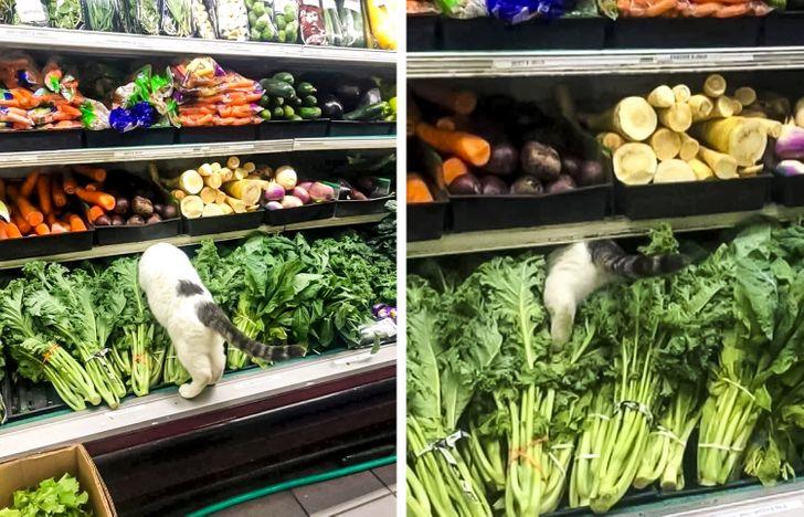 кот на полке с овощами в супермаркете
