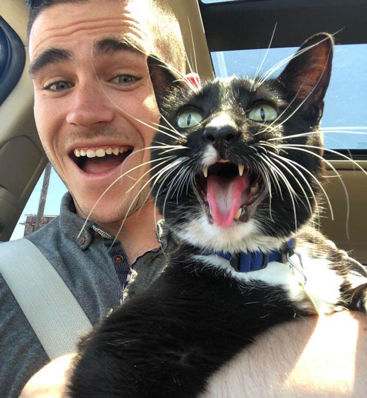 парень и кот в машине