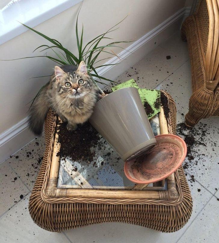 кошка и перевернутый горшок с цветком