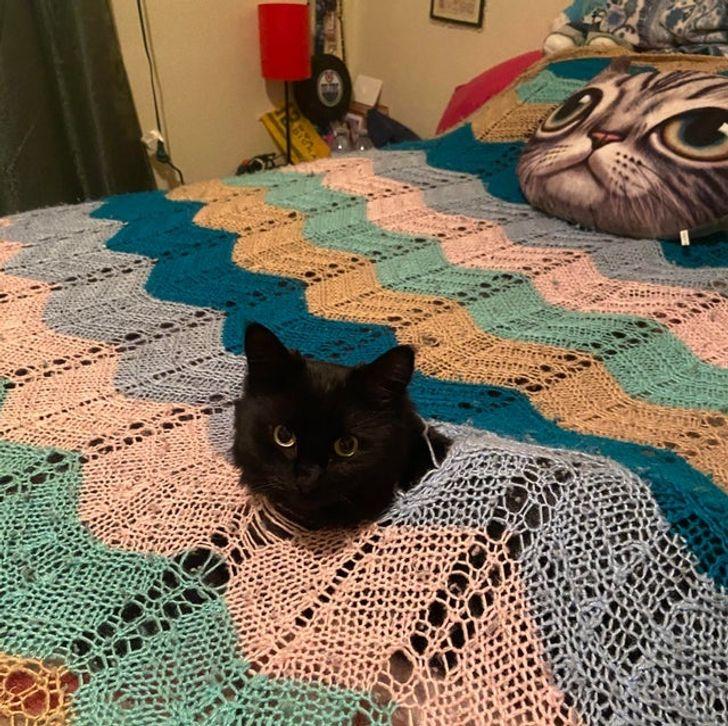 черный кот торчит головой из одеяла