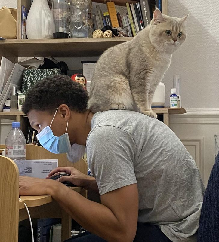 кот сидит на спине у парня за столом