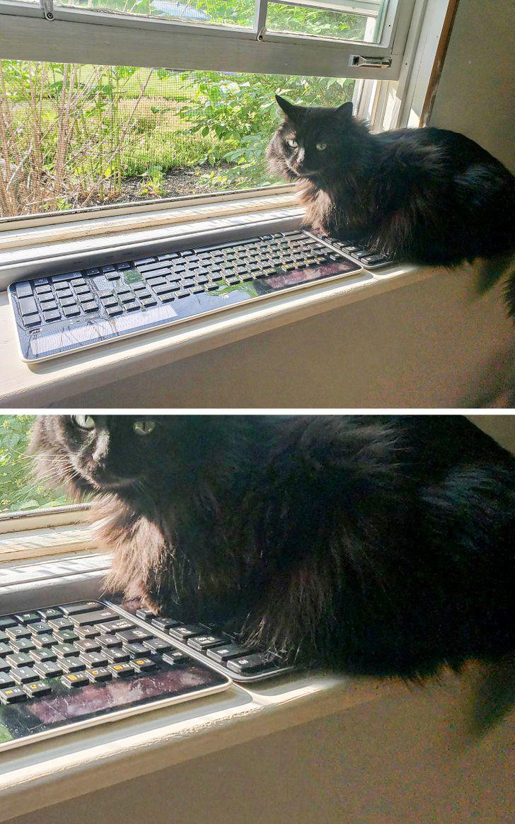 кошка сидит на клавиатуре на подоконнике