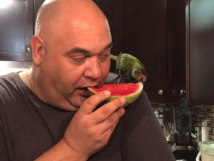 мужчина делится арбузом с попугаем