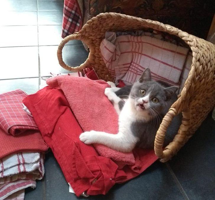кошка лежит в корзине