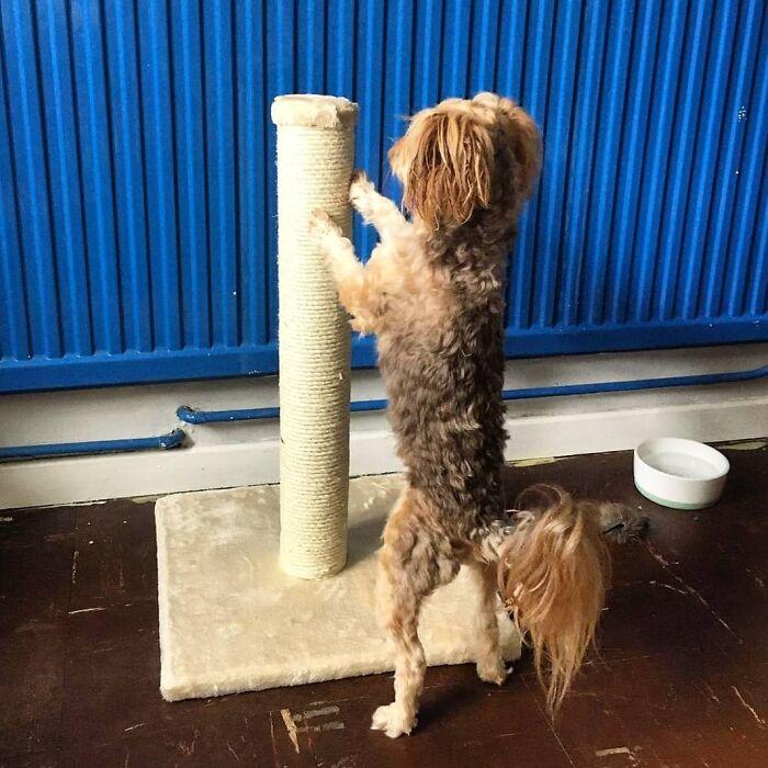 собака возле когтеточки