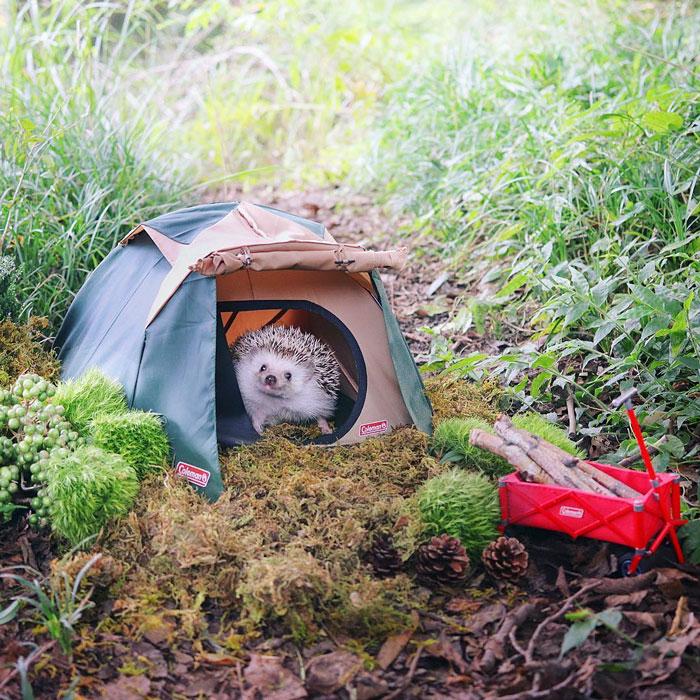 еж в палатке