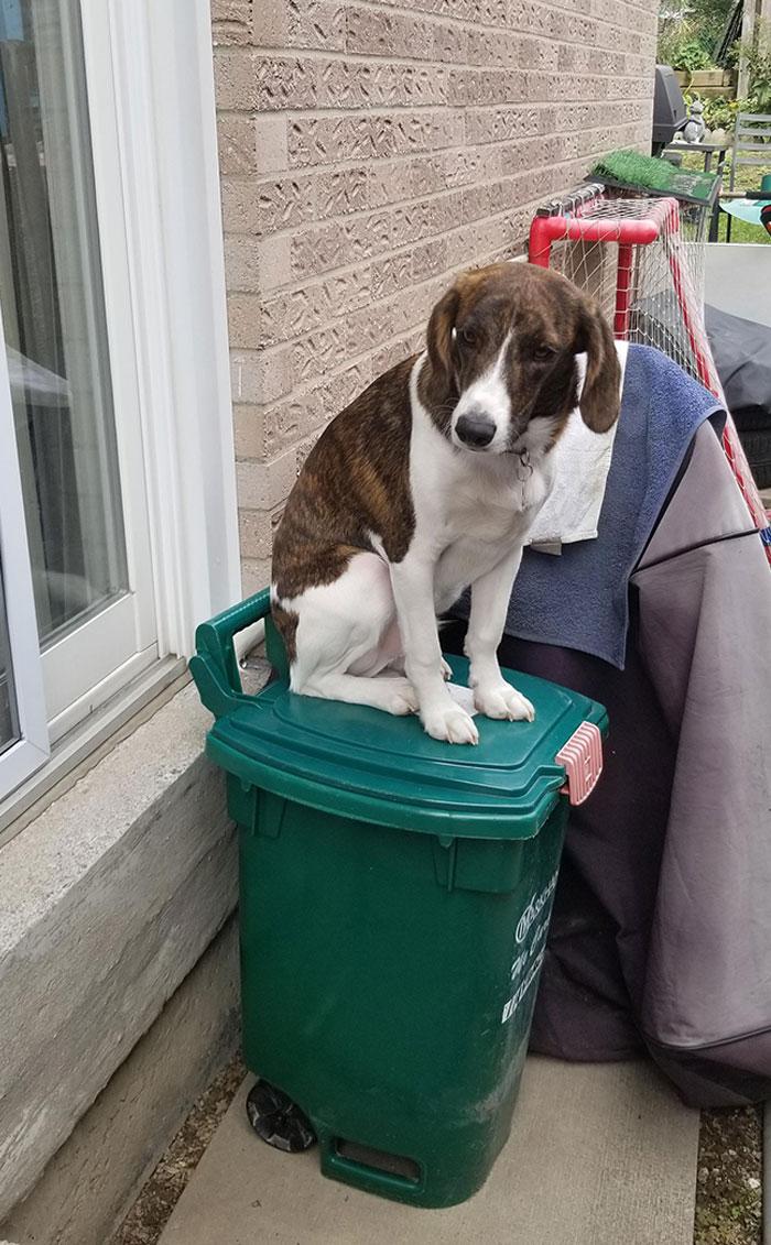 собака сидит на мусорном баке