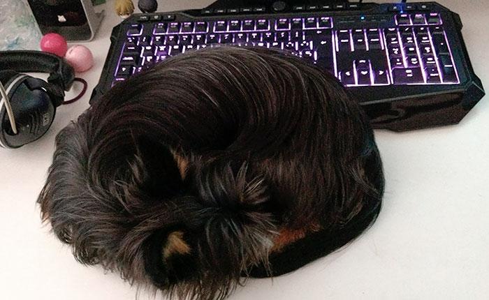 терьер спит рядом с клавиатурой