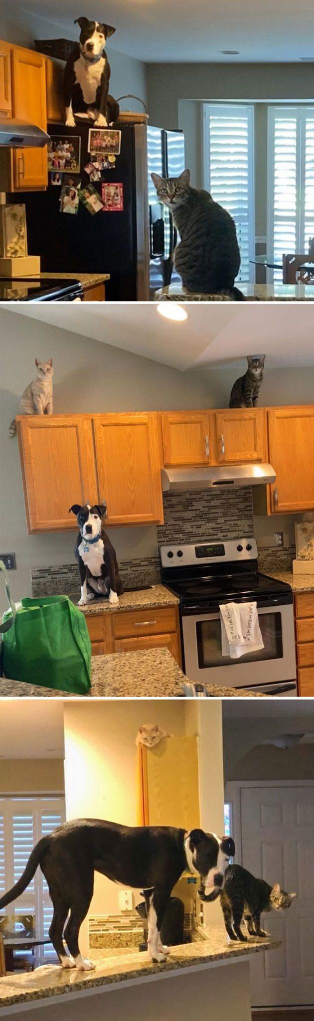 собака и коты в кухне на столе