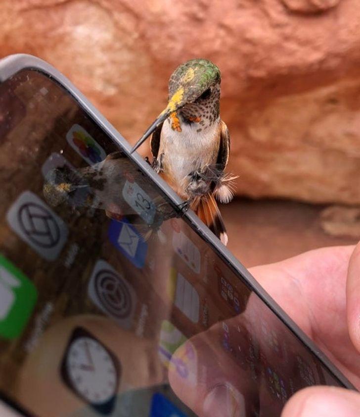 колибри сидит на телефоне