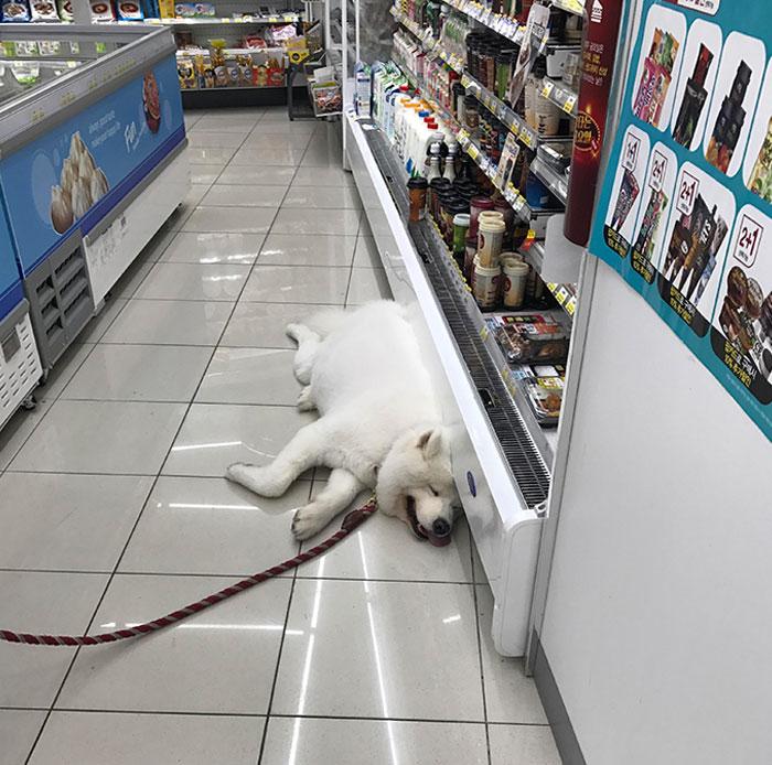белый пес лежит на полу в супермаркете