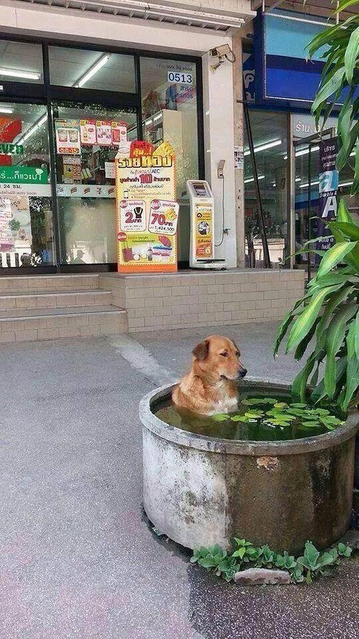 собака сидит в емкости с водой