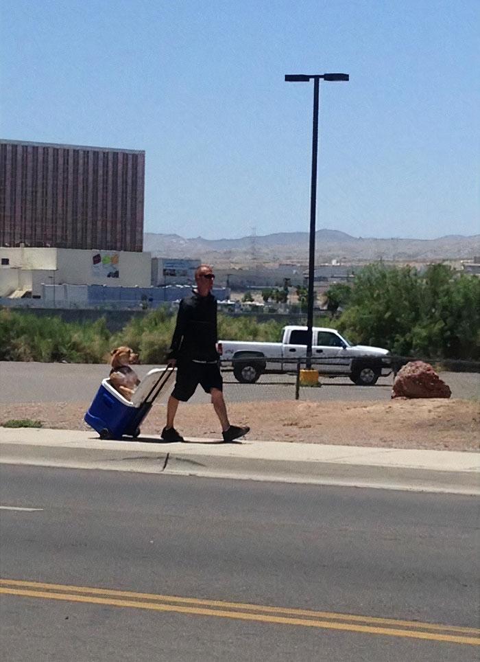 мужчина везет кулер с собакой