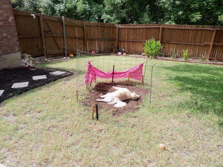 собака лежит на земле