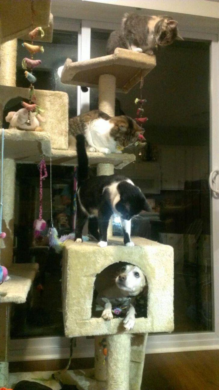 три кота и собака на кошачьем дереве