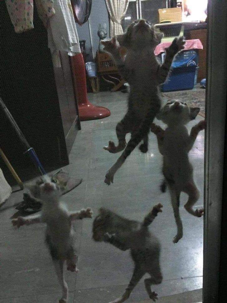 4 котенка висит на сетке на двери