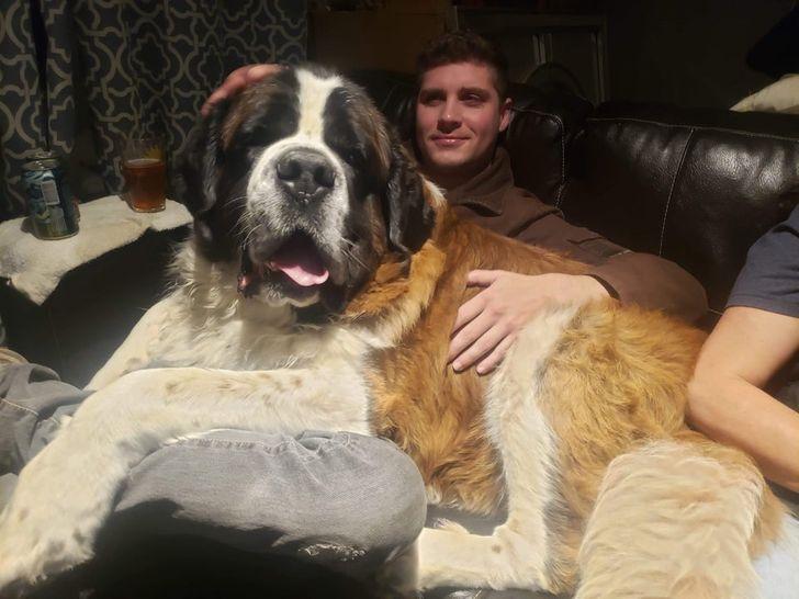 большой пес на руках у парня