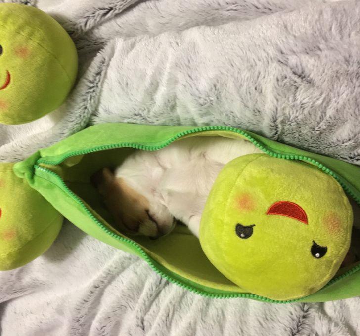 щенок спит в зеленом пенале