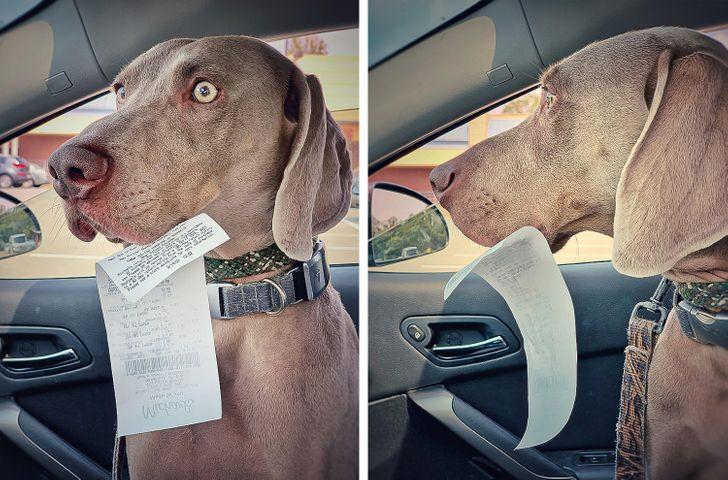пес с чеком на морде