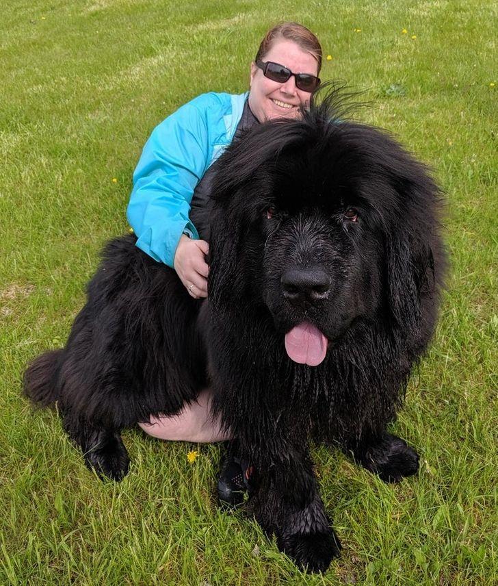 черный пес с хозяином на газоне