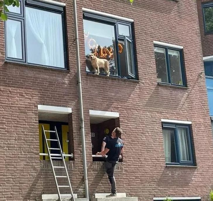 собака стоит на подоконнике за окном