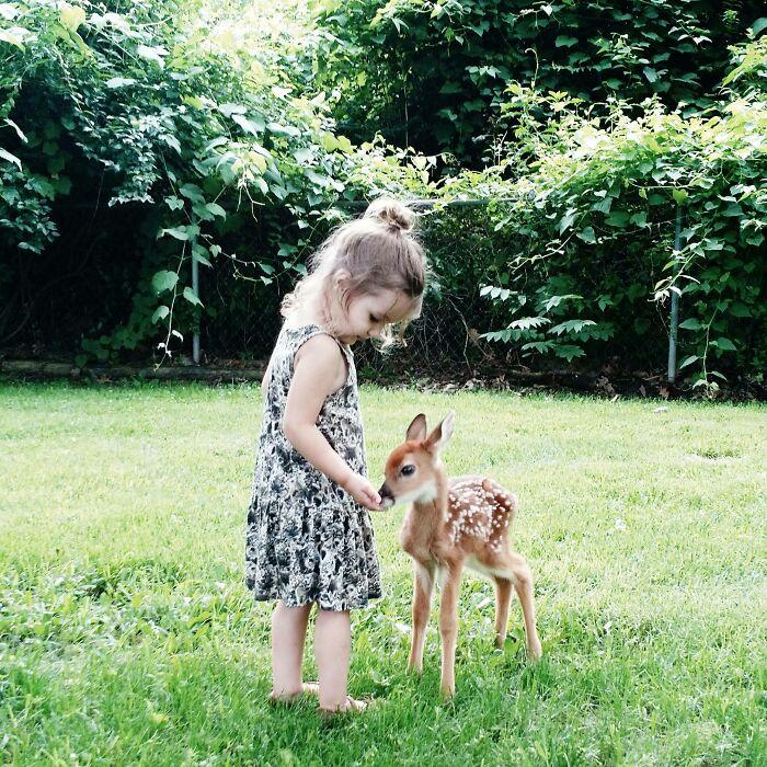 маленькая девочка кормит олененка
