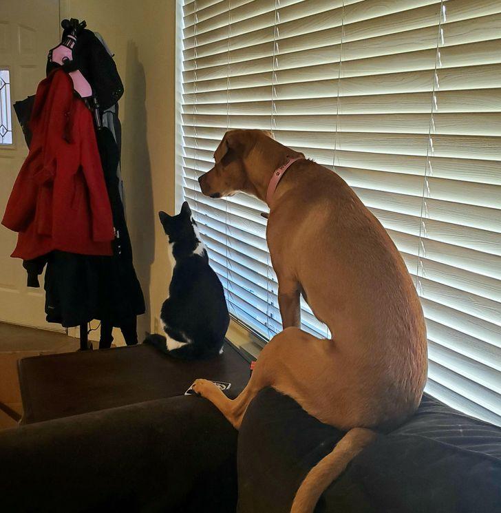 кот и собака сидят на диване