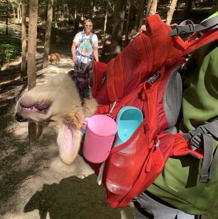 собака спит в рюкзаке за спиной